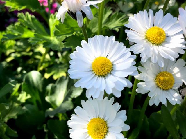 庭へ咲いた花の写真